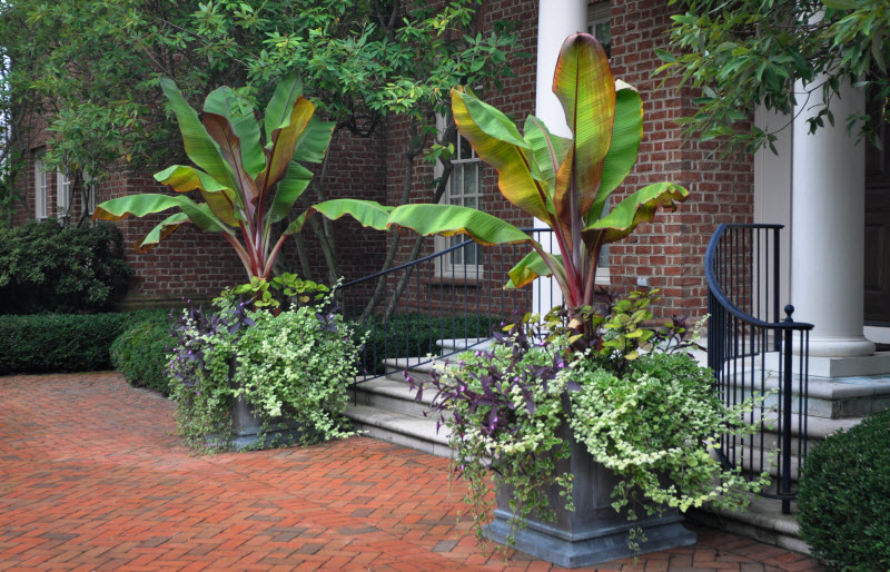 Selecting Containers: Size and Scale, Thinking Outside the Boxwood