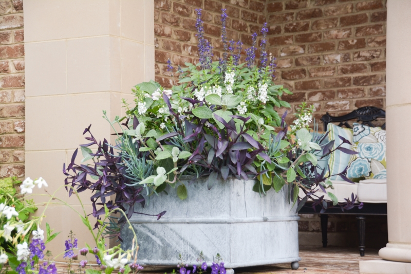 Looking back: Container Designs 2015, Thinking Outside the Boxwood