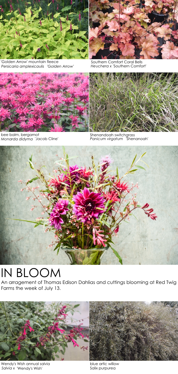 What's in Bloom This Week- July 13 , Thinking Outside the Boxwood