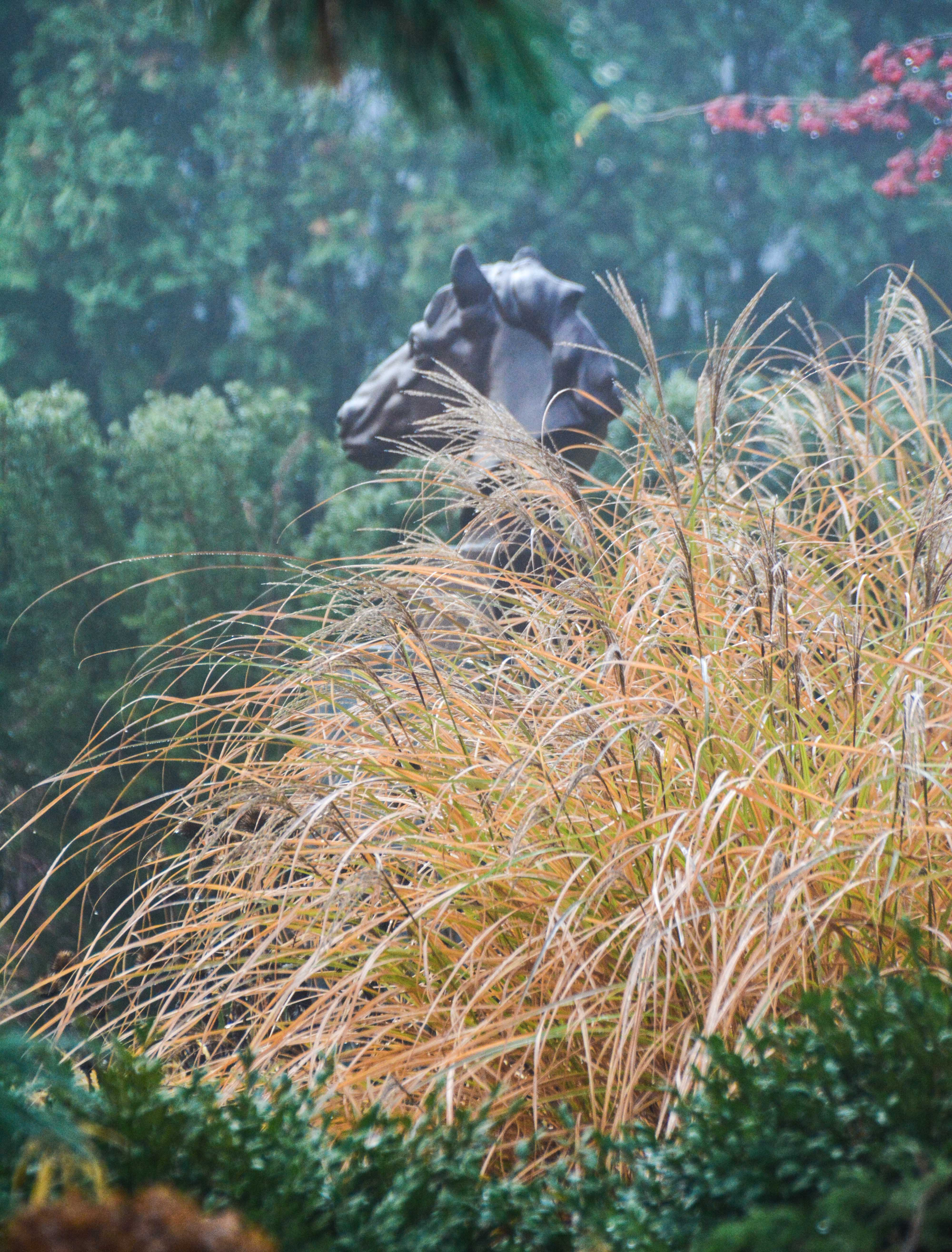 Miscanthus sinensis 'Gracillimus'- eulalia grass, Beauty in Decay, Thinking Outside the Boxwood