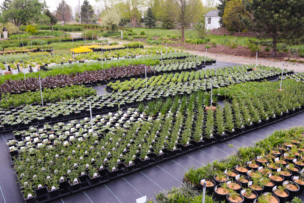 Greenhouse in the Spring, Thinking Outside the Boxwood