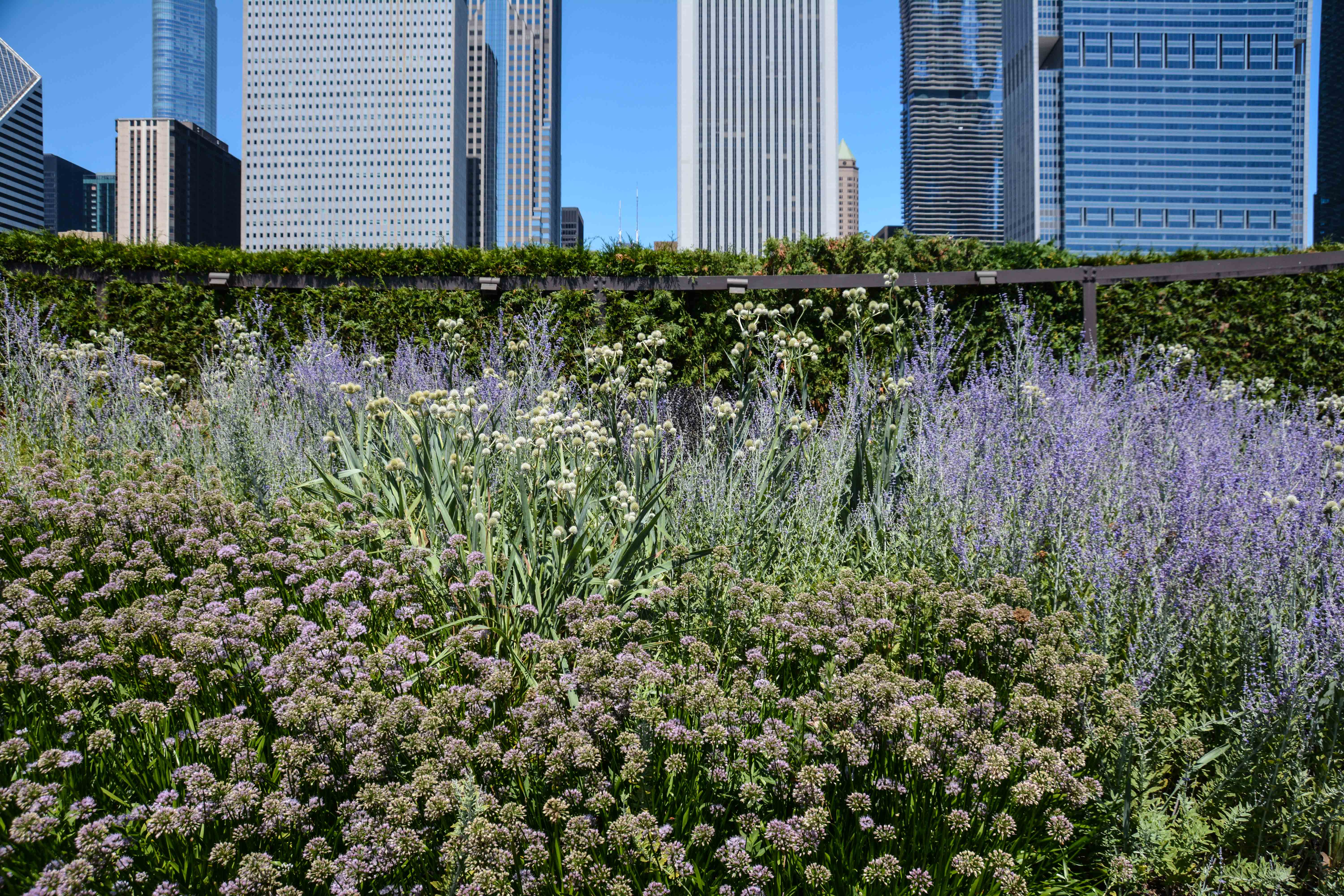 The Lurie Garden - Our Great Midwest Road Trip, Thinking Outside the Boxwood