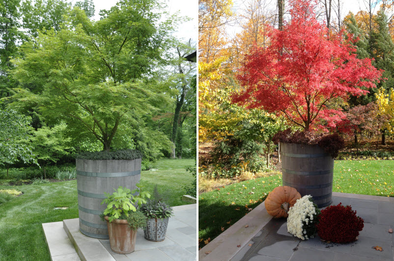 Selecting Containers Size And Scale Thinking Outside The Boxwood