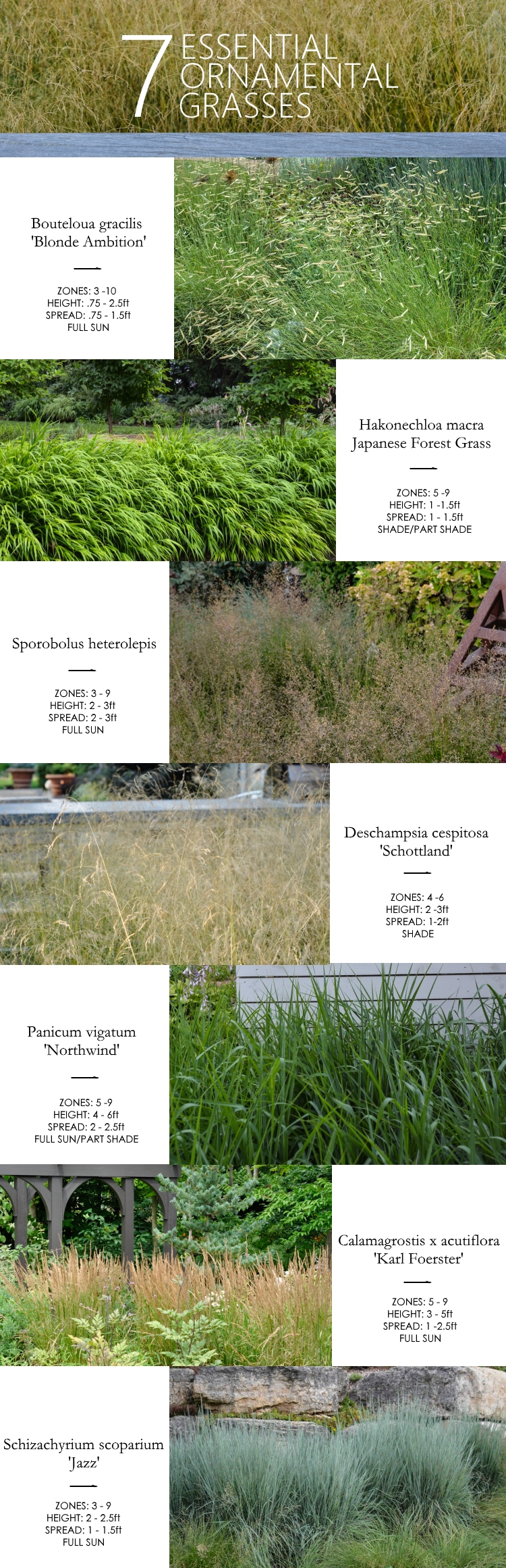 7 Essential Ornamental Grasses, Thinking Outside the Boxwood