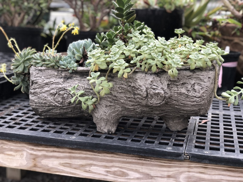 Faux Bois fiber cement table top planter filled with succulents - more at thinkingoutsidetheboxwood.com