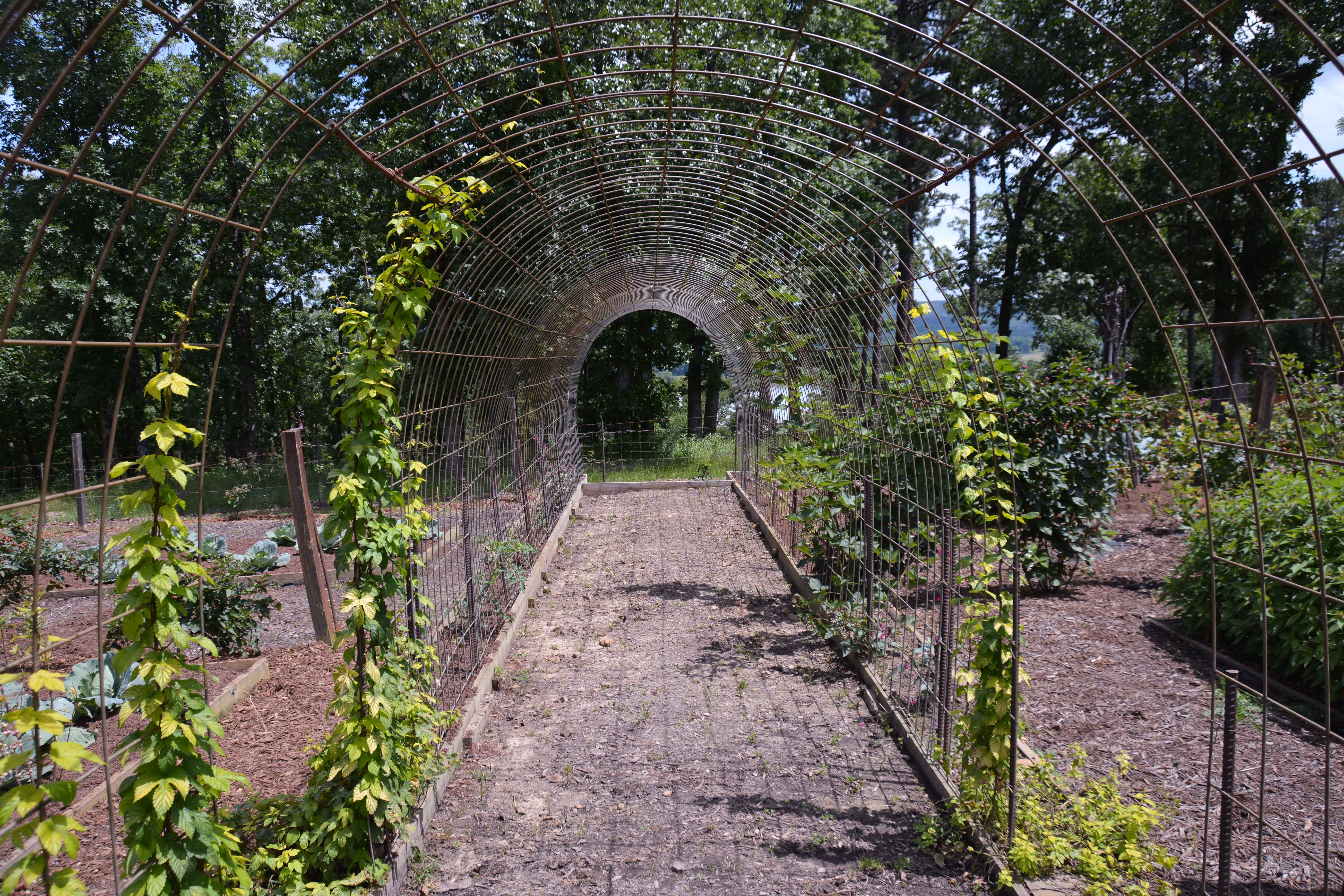 Using wire hog fencing to create a creeping vine tunnel to add structure to your vegetable garden. Garden at Moss Mountain Farm - More images at thinkingoutsidetheboxwood.com